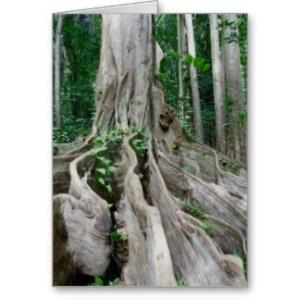 Moreton Bay Fig Tree Root; Card by Fig Tree Gift @zazzle.com, Artist, Joey Chou