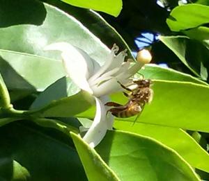 Blossom.Bee
