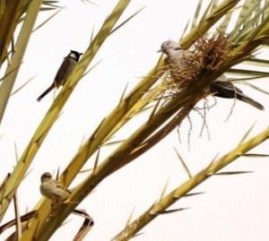 three_little_birds
