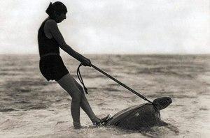 Turtle Riding   National Geographic Magazine