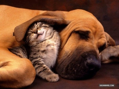 cat-and-dog-cuddling
