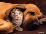 cat-and-dog-cuddling