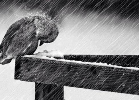 bird-in-rainstorm-bw
